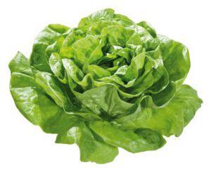 effective lettuce to slim down