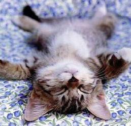 """Résultat de recherche d'images pour """"La qualité du sommeil a-t-elle une influence sur le poids ?"""""""